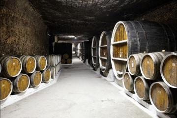 winemaking enterprise Lion Gri