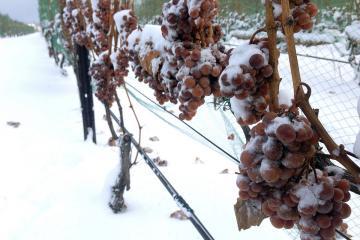 Ice-Wine moldovenesc